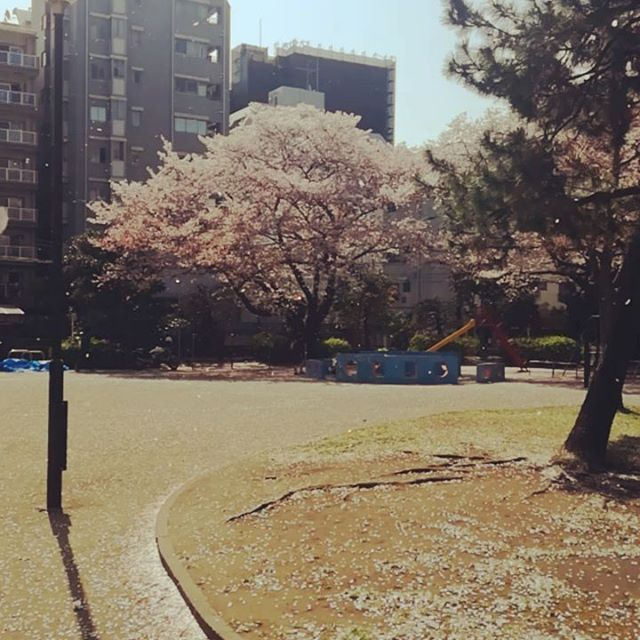 入学式までもってほしい。。 #藤沢#美容室#アナザードア#さくら#2018#スプリング#Japan#スタッフ募集#髪型#ヘアカラー#髪色#オラプレックス#デジパー#入学式#卒業式
